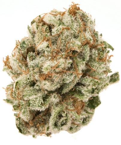 what is the strongest marijuana in the world