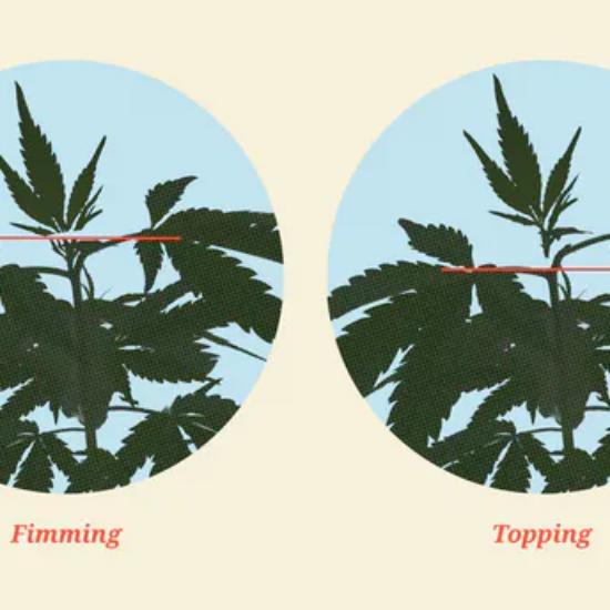 topping marijuana