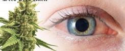 weed eyes