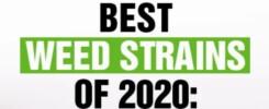 Best Strains 2020
