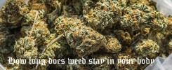 how long does weed stay in your body
