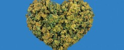 Best strains for sex