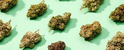 what-is-the-strongest-marijuana-in-the-world